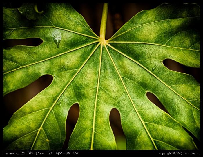 130506-Green
